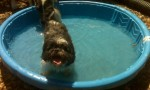 louie in pool